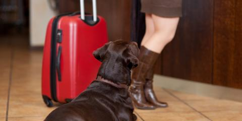 3 Tips for Using a Pet Boarding Facility When Going on Vacation, Hilo, Hawaii