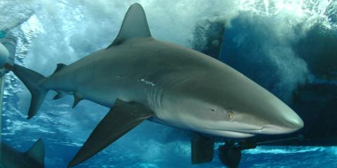 5 Common Misconceptions About Sharks, ,