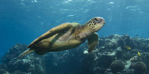 Meet Hawaii's 3 Native Sea Turtles, Waialua, Hawaii