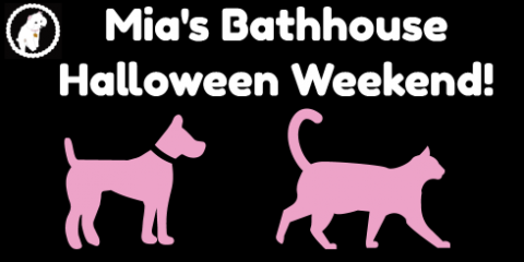 Halloween Party & Dog/Cat Grooming Specials S, Manhattan, New York