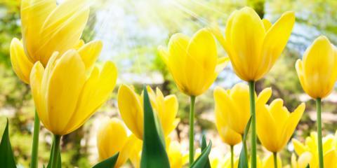 Best Spring Flower Arrangements by Month, Hamden, Connecticut