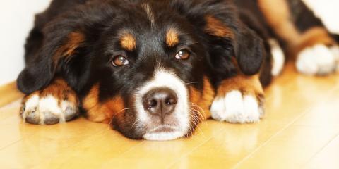 Top 3 Flooring Options For Pet-Friendly Homes, Hamilton, Ohio