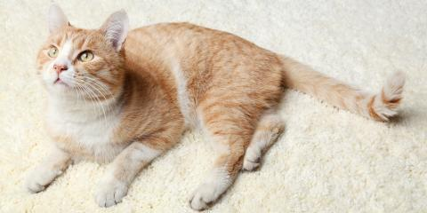 The Best Type of Carpeting for Cats, Hamilton, Ohio