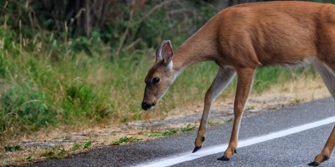 What Should You Do If You Hit a Deer?, Hamilton, Ohio