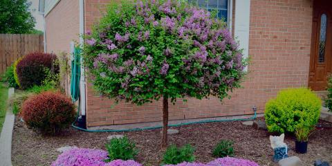 6 Tree Care Tips From Hamilton's Trusted Tree Service Company, Hamilton, Ohio