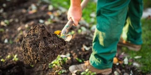 4 Common Lawn Weeds & How to Handle Them, ,