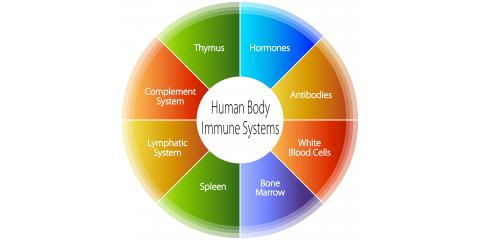 What is the Lymphatic System?, High Point, North Carolina