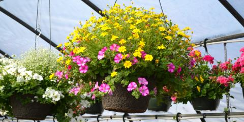 No Room for a Garden? Hanging Plants Add Instant Color & Texture, Anchorage, Alaska