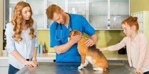 3 of the Most Common Parasites in Household Pets, Bainbridge Island, Washington