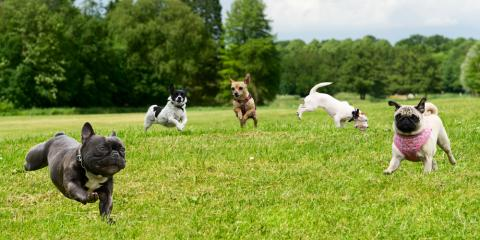 5 Qualities to Look for in a Great Dog Day Care , Addison, Illinois
