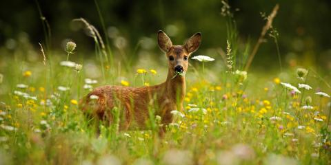 3 Tips for Keeping Deer Out of Your Yard, Brookfield, Connecticut