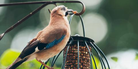 3 Types of Birdseed for Bird Watching, Arden Hills, Minnesota