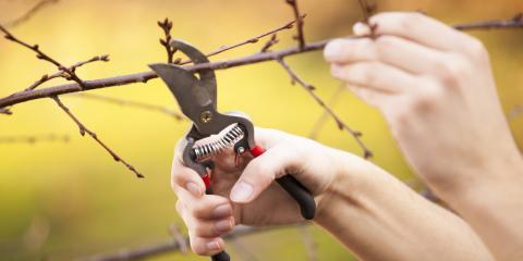 Hardware Store Explains Best Time to Prune Trees, New Brighton, Minnesota
