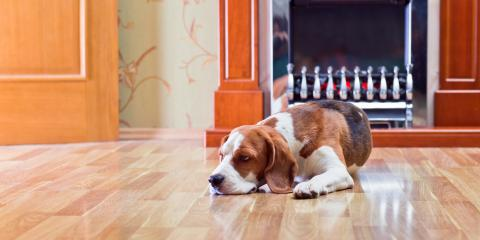 The Best Hardwood Flooring for Dog Owners, Waterbury, Connecticut