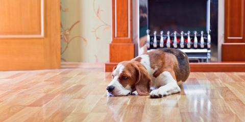3 Tips to Protect Hardwood Floors From Pets, Lincoln, Nebraska
