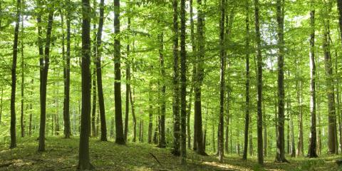 4 Facts About the Sustainable Nature of US Hardwood, Middlefield, Ohio
