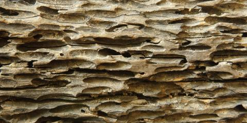 how to kill wood eating insects