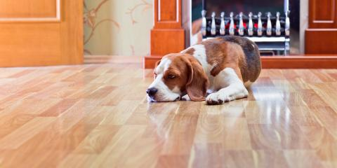 3 Tips for Protecting Hardwood Flooring From Pet Damage, Chesterfield, Missouri