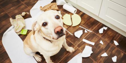 3 Kitchen Floor Designs All Pet Owners Should Consider, Holmen, Wisconsin