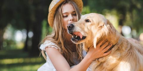 How Courts Decide Custody of Pets in a Divorce, Farmington, Connecticut