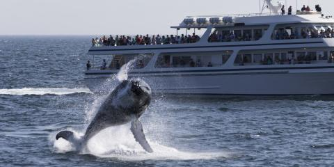 A Guide to Whale Watching in Boston, Bolton, Connecticut