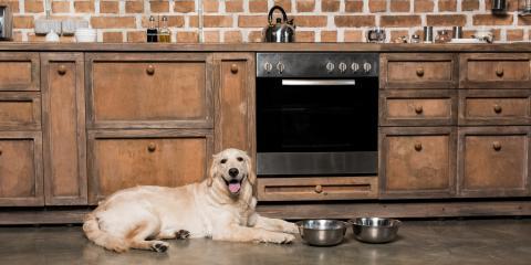 3 Ways to Make a Custom Kitchen Pet Friendly, Greenburgh, New York
