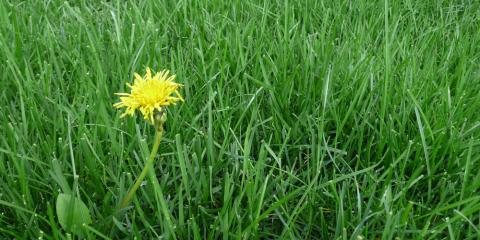 Weed Control: 3 Ways to Prevent Weed Infestations, Lake Havasu City, Arizona
