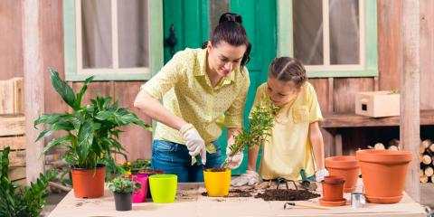 3 Garden Pests to Look Out for This Spring , Lake Havasu City, Arizona