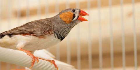3 Common Diseases in Pet Birds, Honolulu, Hawaii