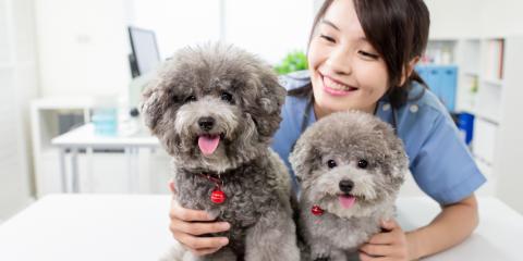 FAQ About Pet Vaccinations, Mililani Mauka, Hawaii