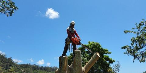 Tree Care Company Shares Top 3 Signs of a Healthy Tree, Honolulu, Hawaii