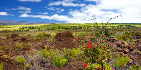 The Goal of Habitat Restoration & Why It's Crucial to Hawaii's Landscape, Koolaupoko, Hawaii