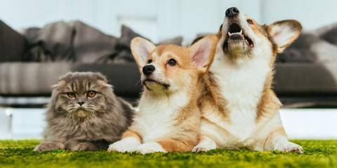 Top FAQ About Heartworms in Pets, Round Lake, Wisconsin