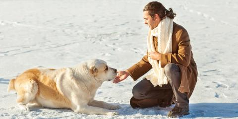 5 Ice Safety Tips for Pets, Round Lake, Wisconsin