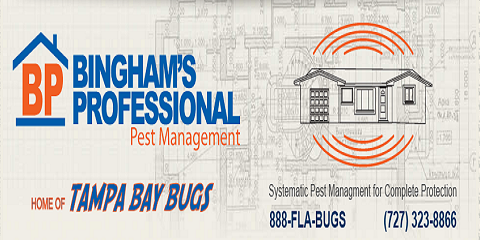 Pest Advice for Spring Hill Pest Control Services by Bingham's Professional Pest Management, St. Petersburg, Florida