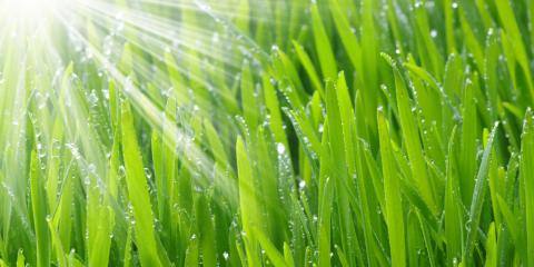 What Is Sustainable Lawn Care? , Honolulu, Hawaii