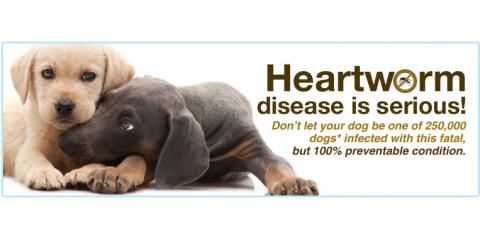 20% OFF Heartworm Tests, Wahiawa, Hawaii