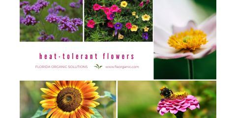 Heat-tolerant Flowers, Brandon, Florida