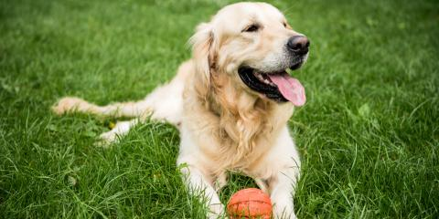 A Guide to Preventing CCL Injuries in Dogs, Buckeye Lake, Ohio