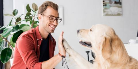 How Homeowners Can Pet-Proof Their HVAC Systems, ,