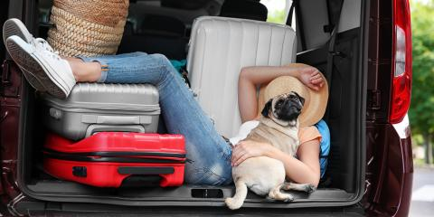 3 Tips to Prepare Your Pet for Moving Day, Cincinnati, Ohio
