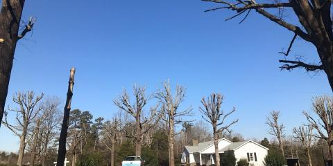 3 Signs That Your Trees Are Diseased, New London, North Carolina