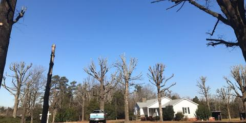 What Causes Trees to Lean?, New London, North Carolina