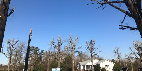 3 Benefits of Having Tree Removal by a Professional Arborist, New London, North Carolina