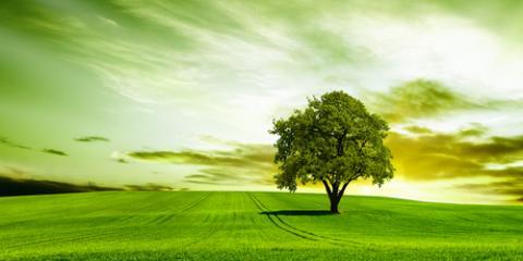 Kamuela Arborist Explains How to Tell If Your Trees Are Healthy, Waimea, Hawaii