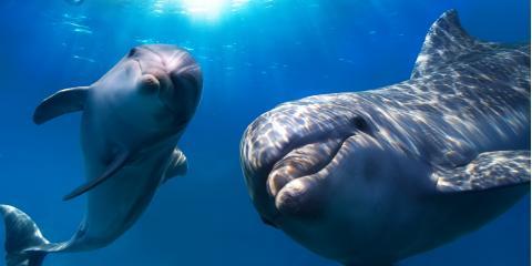 4 Commonly Seen Dolphin Species in Hawaii, Ewa, Hawaii