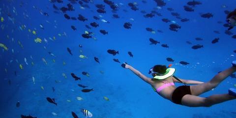 4 Examples of Ocean Wildlife to See on a Hawaiian Snorkeling Tour, Ewa, Hawaii