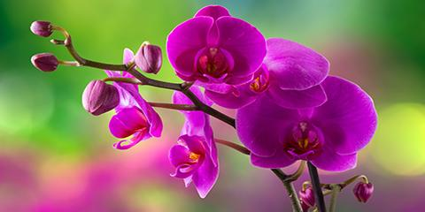 3 Tips for Caring for Your Orchid Flowers, Kihei, Hawaii
