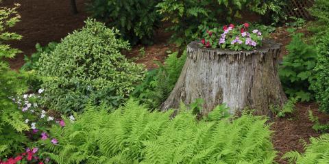 An Expert's Guide to Tree Stump Removal, Makawao-Paia, Hawaii