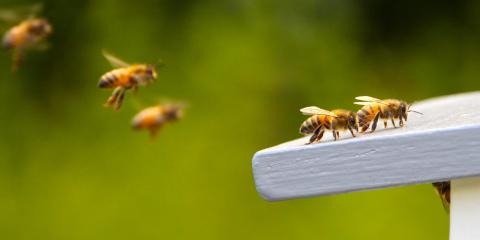 3 Strategies to Keep Bees Out of Your Yard, Houston, Texas